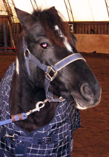 Reaching Strides Equestrian Centre Sold Horses